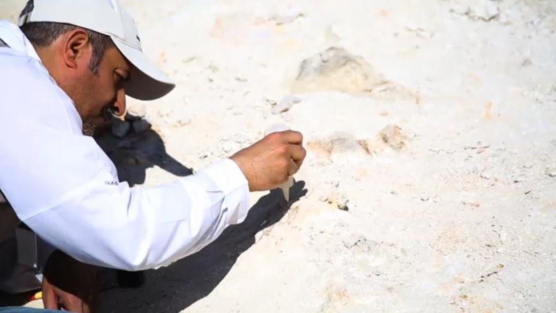 37f9dd13 9aaf 45de bc08 a00aa6c2b7a8 16x9 1200x676 - شاهد.. اكتشاف بقايا حوت منقرض منذ 37 مليون سنة شمال السعودية