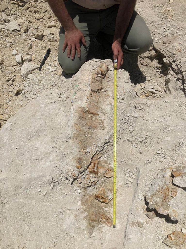 534 156 767x1024 1 - شاهد.. اكتشاف بقايا حوت منقرض منذ 37 مليون سنة شمال السعودية
