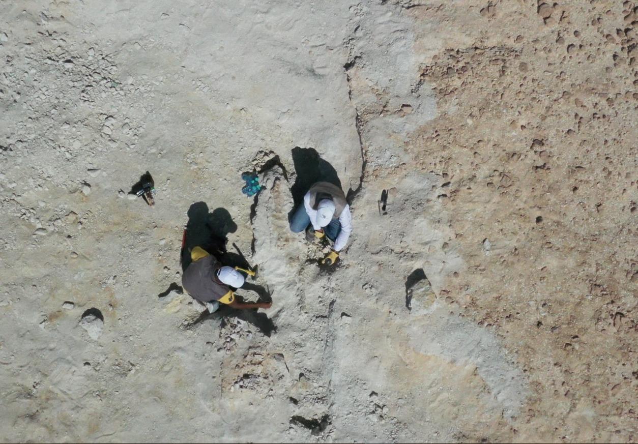 E442Pj1XoAQMn9s - شاهد.. اكتشاف بقايا حوت منقرض منذ 37 مليون سنة شمال السعودية