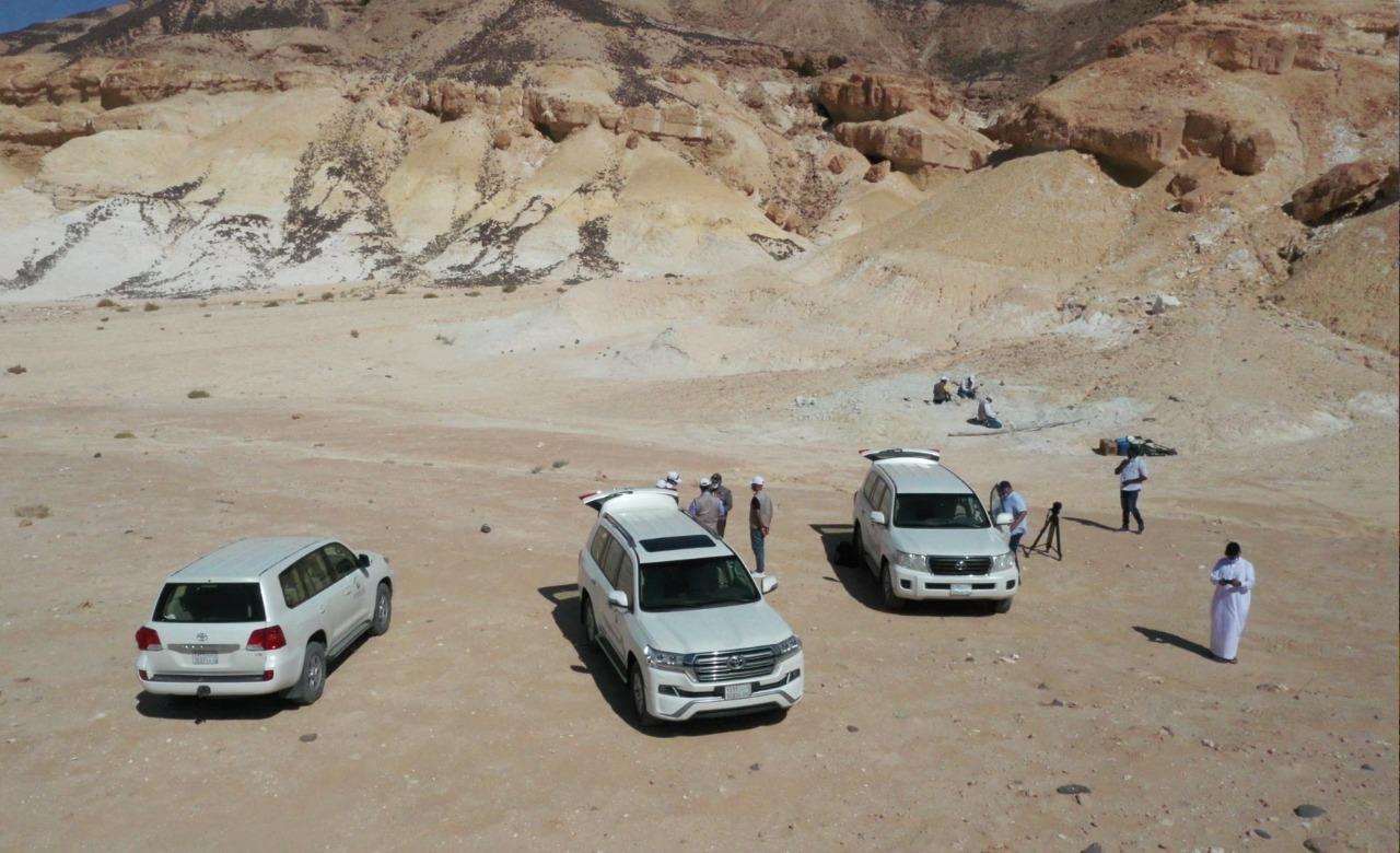 E442PkeXoAIBK2t - شاهد.. اكتشاف بقايا حوت منقرض منذ 37 مليون سنة شمال السعودية